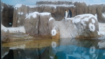 Penguins! :)