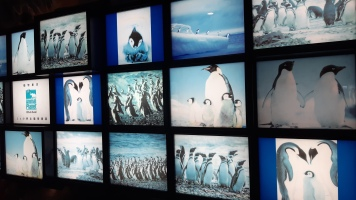Photographs of penguins