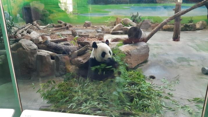 Hungry panda :D